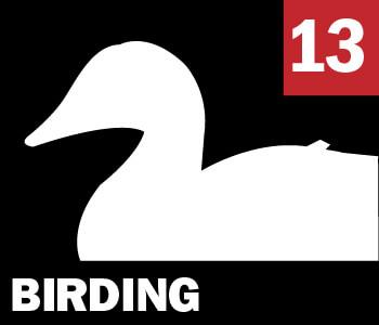 13 BIRDING
