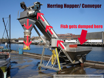 herring conveyor