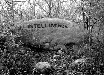 intelligence 5x7